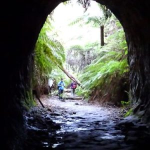 wandern wanderungen hiking blue mountains guide guided hike walk bush Sydney Australien Australia Wolfgang Hedi bergwandern wandern tour tours track interpretive plants animals