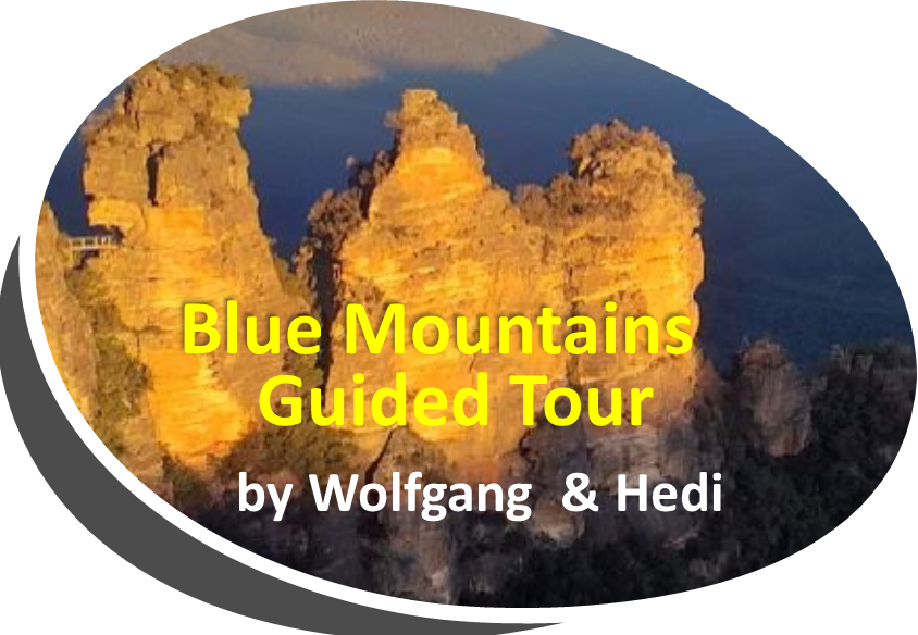 wandern wanderungen hiking blue mountains guide guided hike walk bush Sydney Australien Australia Wolfgang Hedi bergwandern wandern tour tours track interpretive plants animals
