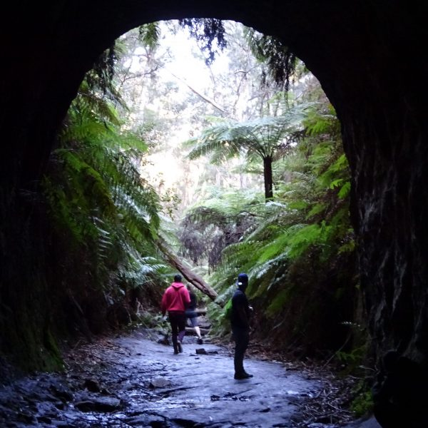hiking guide guided walk hike blue mountains glow worm tunnel track sydney wolfgang hedi walking bush